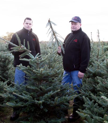 Opnieuw ruim 500 bomen geknakt bij kerstboomkweker in Geesteren: 'Doelbewust'